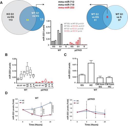 p27 regulates miR-223 expression following contact inhibition.