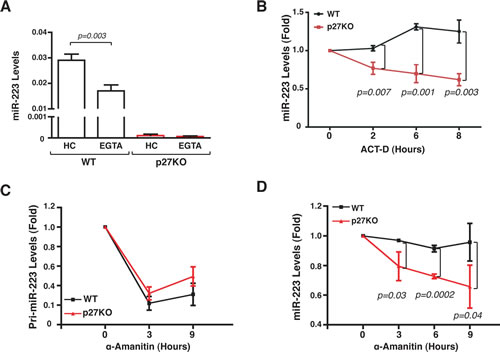 Contact inhibition regulates miR-223 transcription.