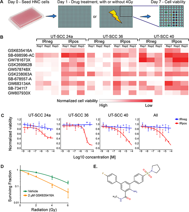 A kinase inhibitor screen identifies GSK635416A as a potential novel radiosensitizer for head and neck cancer.