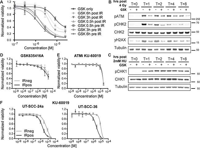 GSK635416A targets the DDR pathway.