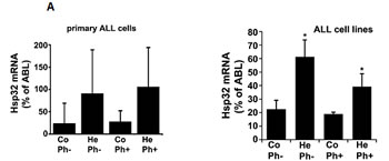 Expression of Hsp32 in ALL cells.