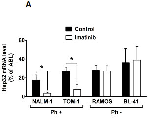 Figure2: Targeting of Hsp32 in ALL cells and functional consequences.