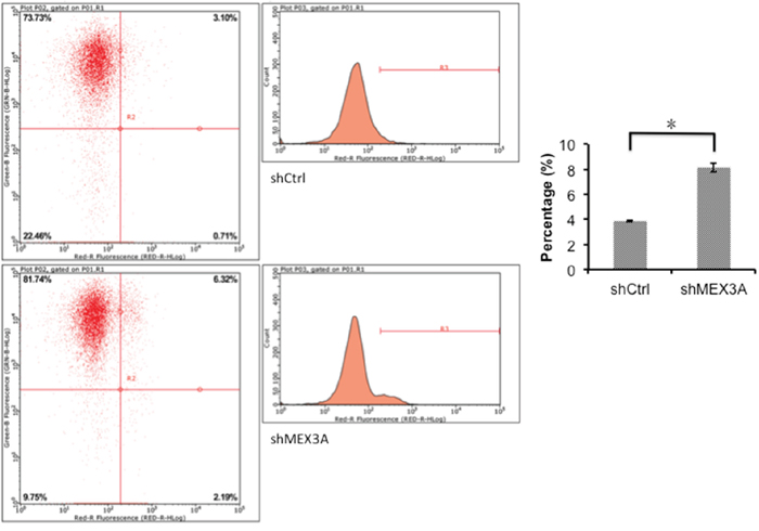 5637 cell apoptosis analyzed by flow cytometry.