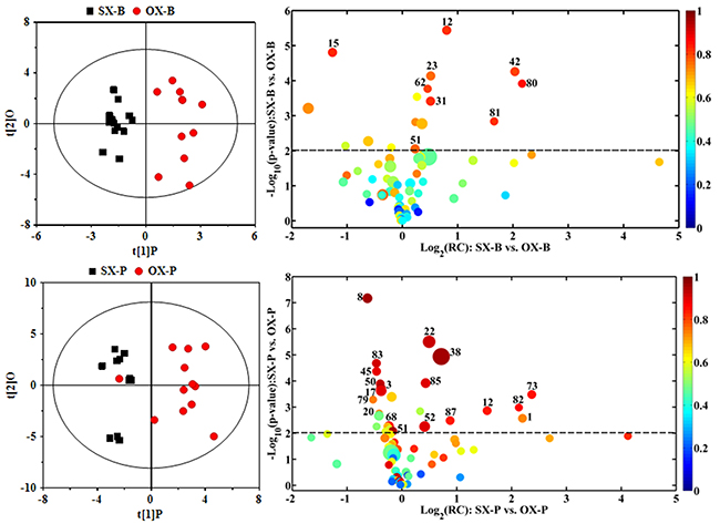 OPLS-DA scores plots (left panels) and the corresponding volcano plots (right panels) derived from 1H NMR data of the tissue samples from BxPC-3 (-B) and Panc-1 (-P) cell induced subcutaneous(SX-) and orthotopic (OX-)xenograft groups.