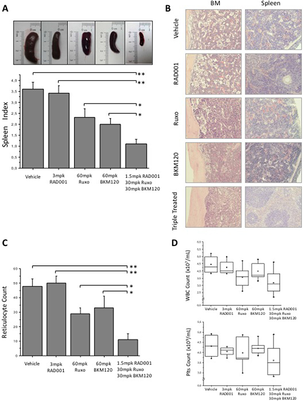 Efficacy of BKM120, RAD001 and ruxolitinib, single or in triple combination, in JAK2V617F knock-in mice.