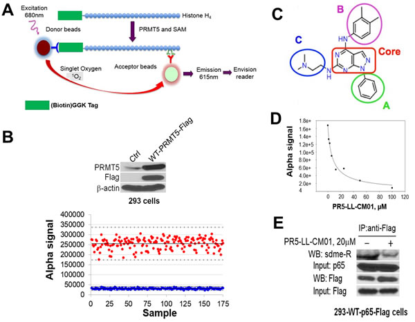 Discovery of PR5-LL-CM01 as a novel PRMT5 inhibitor through PRMT5-specific AlphaLISA HTS technique.