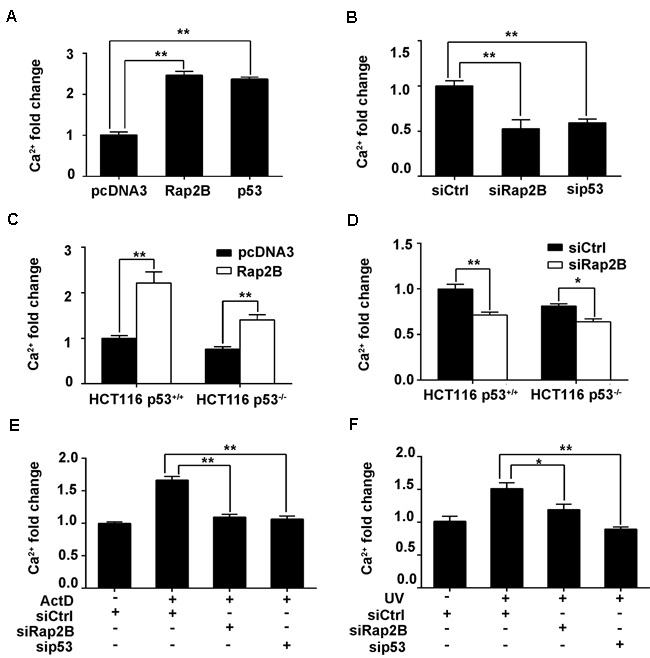 p53 can increase the intracellular Ca