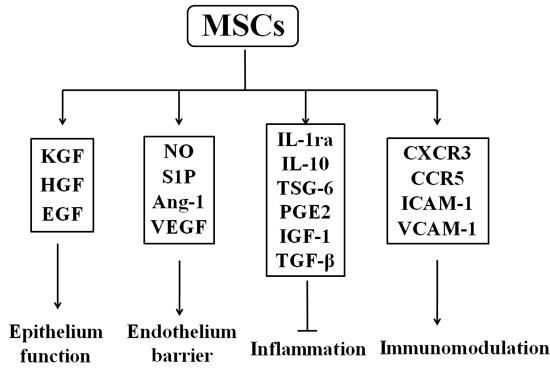 Secretome of mesenchymal stem cells.