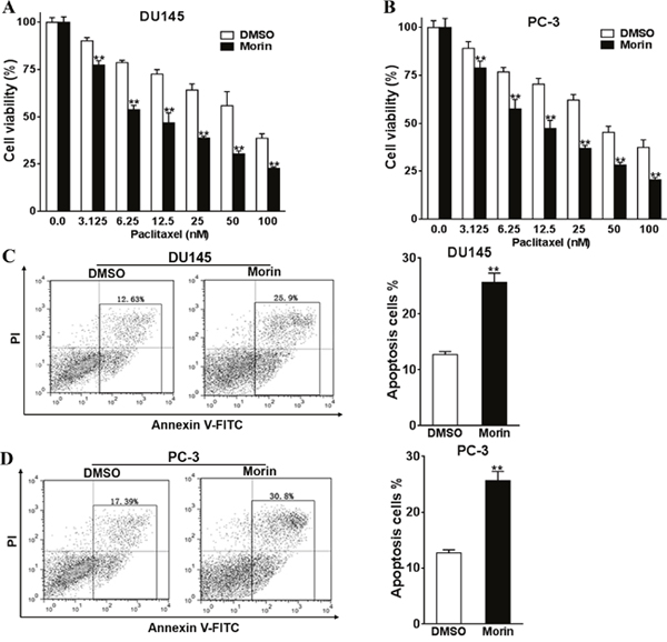 Morin promotes prostate cancer cells chemosensitivity to paclitaxel.