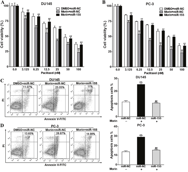Overexpression of miR-155 reverses the roles of morin in promoting prostate cancer cells sensitivity to paclitaxel.