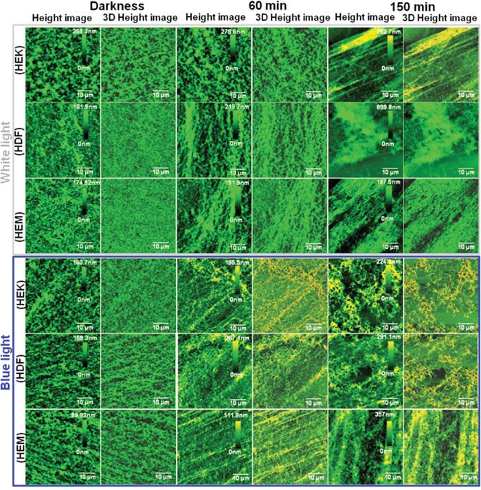 Bio-AFM assessment of human skin cell-ECM.