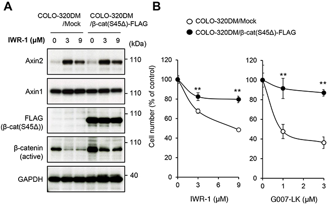 Tankyrase inhibitors suppress colorectal cancer COLO-320DM cell proliferation through inhibition of the β-catenin pathway.