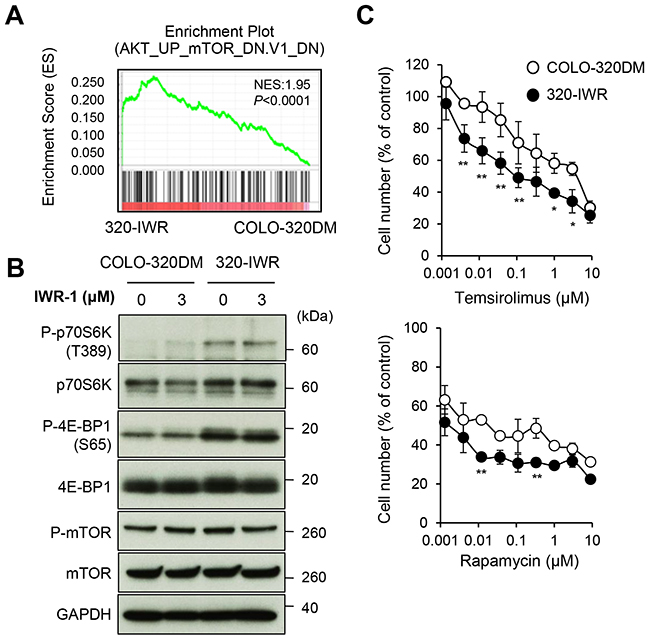 Activation of mTOR signaling pathway in tankyrase inhibitor-resistant 320-IWR cells.