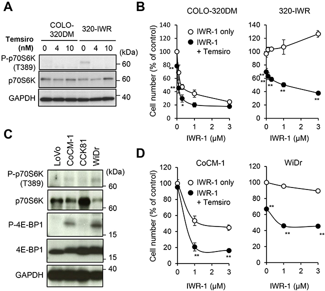 mTOR pathway activation confers resistance to tankyrase inhibition in 320-IWR cells.