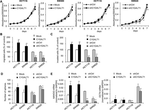 C1GALT1 regulates malignant phenotypes of colon cancer cells.