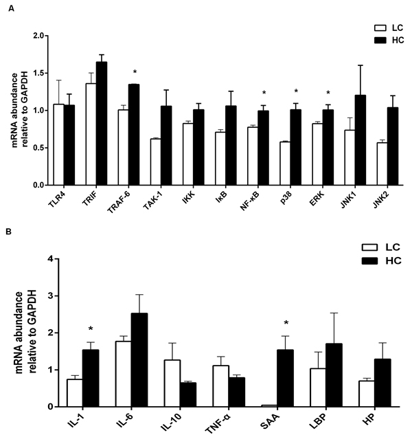 The mRNA relative expression of immune genes in the liver of dairy cows from high-concentrate (HC) and low-concentrate (LC) diet detected by Real-Time qPCR.
