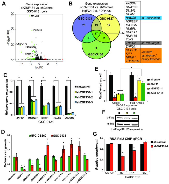 ZNF131 regulates expression of the