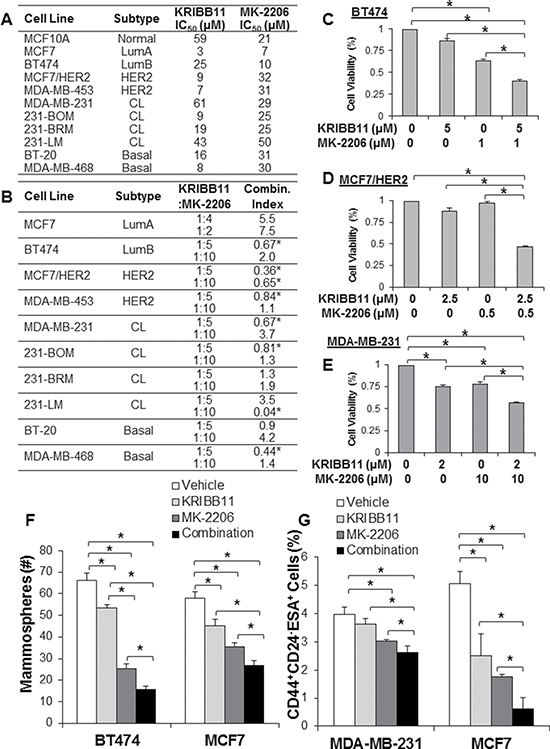 Combined inhibition of HSF1 and AKT synergistically kills breast cancer cells of different subtypes.