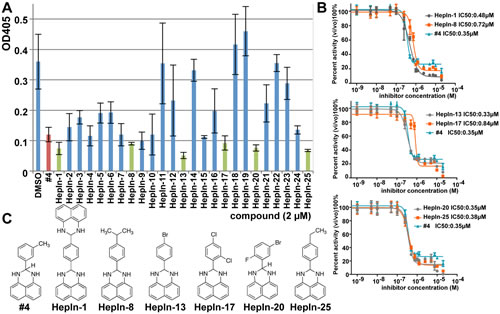 Identification of novel small molecule Hepsin inhibitors.