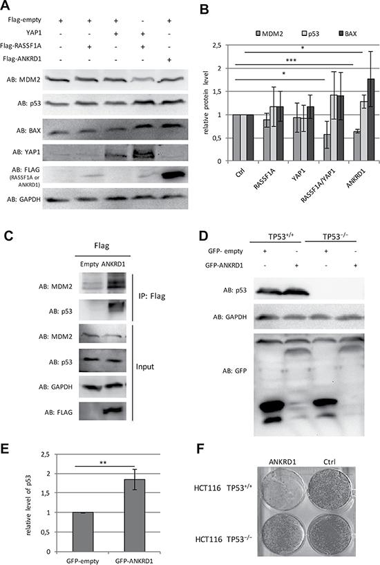 Tumor suppressive function of ANKRD1.