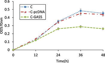 MTT method detected changes of OSCC cell proliferation after transfection of pcDNA-GAS5, 570 nm absorbance of C, C-pcDNA and C-GAS5 from 0 h to 48 h (p < 0.05).