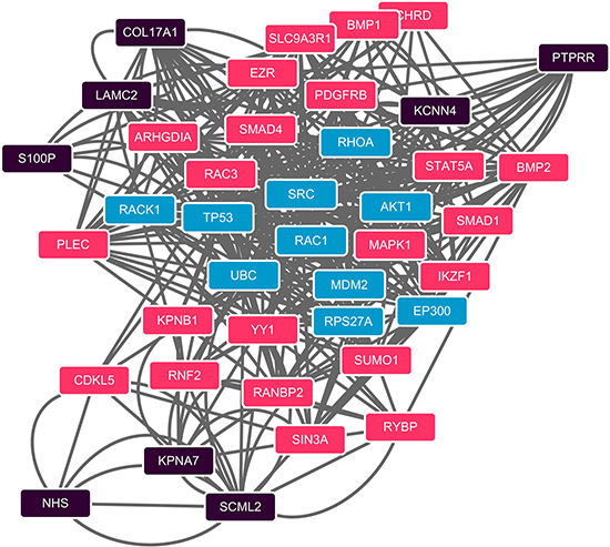 PPI network of shortest paths among 40 computational method identified proteins.