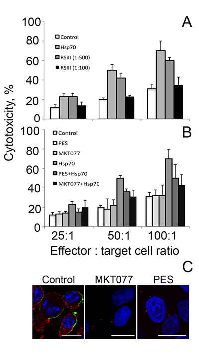 Fig 4: Whole Hsp70 molecule is needed for acquisition of cytotoxic activity.