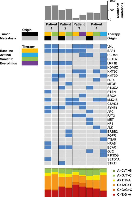 Coding somatic mutations identified in primary tumors and metastatic sites at baseline and upon progression.