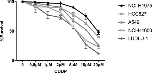 Dose-response curve of CDDP in NSCLC cell lines.