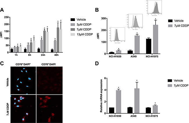 Changes in CD70 protein- and mRNA expression levels in response to CDDP-therapy.
