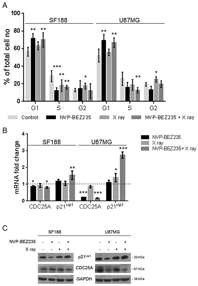 Effects of combination of NVP-BEZ235 and X ray on cell cycle.