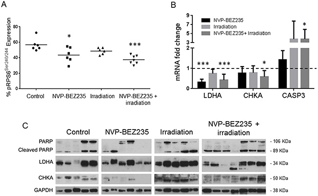 Enzymatic changes involved in metabolism following treatment with NVP-BEZ235 and X ray in tumor extracts of an aGBM model.