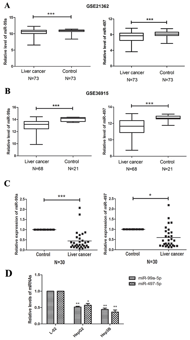 miR-99a and MiR-497 were down-regulated in HCC tissues and cell lines.