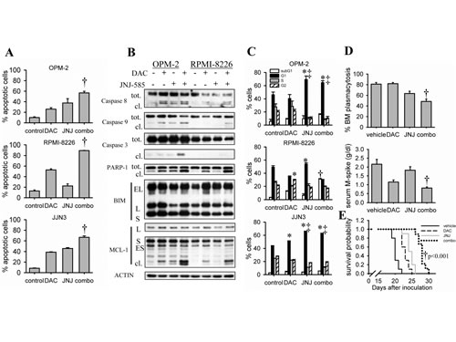 JNJ-585 enhances decitabine-mediated anti-MM effects.