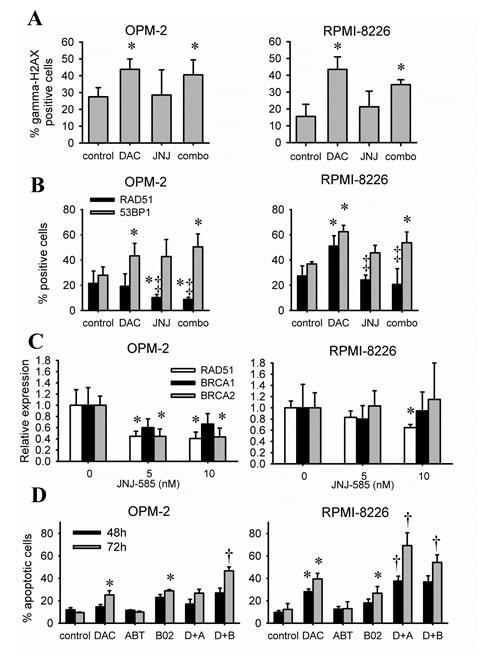 JNJ-585 affects the repair response elicited by decitabine.