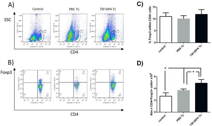 Changes in spleen CD4+ Foxp3+ cells 21 days post