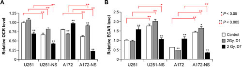 Cellular bioenergetics measured by flux analysis of irradiated parental and NS subcultures of U251 and A172 cells.