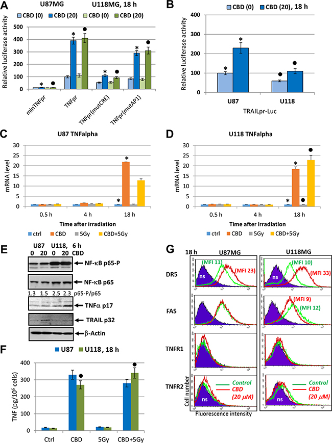 Effects of CBD on TNFα and TRAIL expression and secretion and surface expression of death receptors in glioblastoma cells.