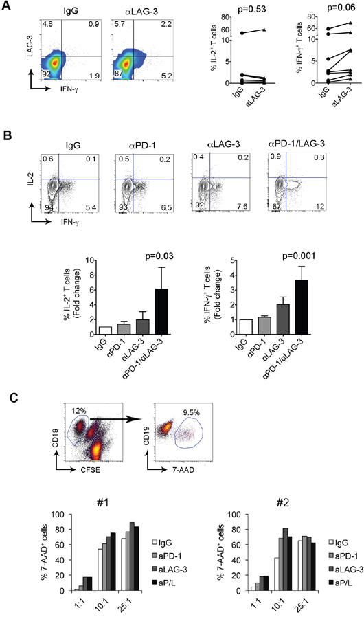 LAG-3 and PD-1 blockade reverses the dysfunction of T cells.