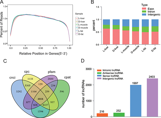 Overview of lncRNA sequencing data.