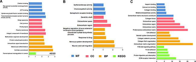 GO terms and KEGG pathways analysis by target genes of 3 lncRNAs.