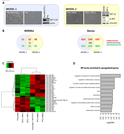 Micro-RNA and gene expression profiles of