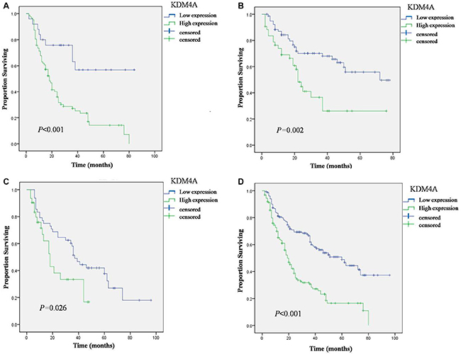 Overall Survival (OS) of OSCC patients with high and low expression of KDM4A in three cohorts defined by the Kaplan-Meier survival curves.