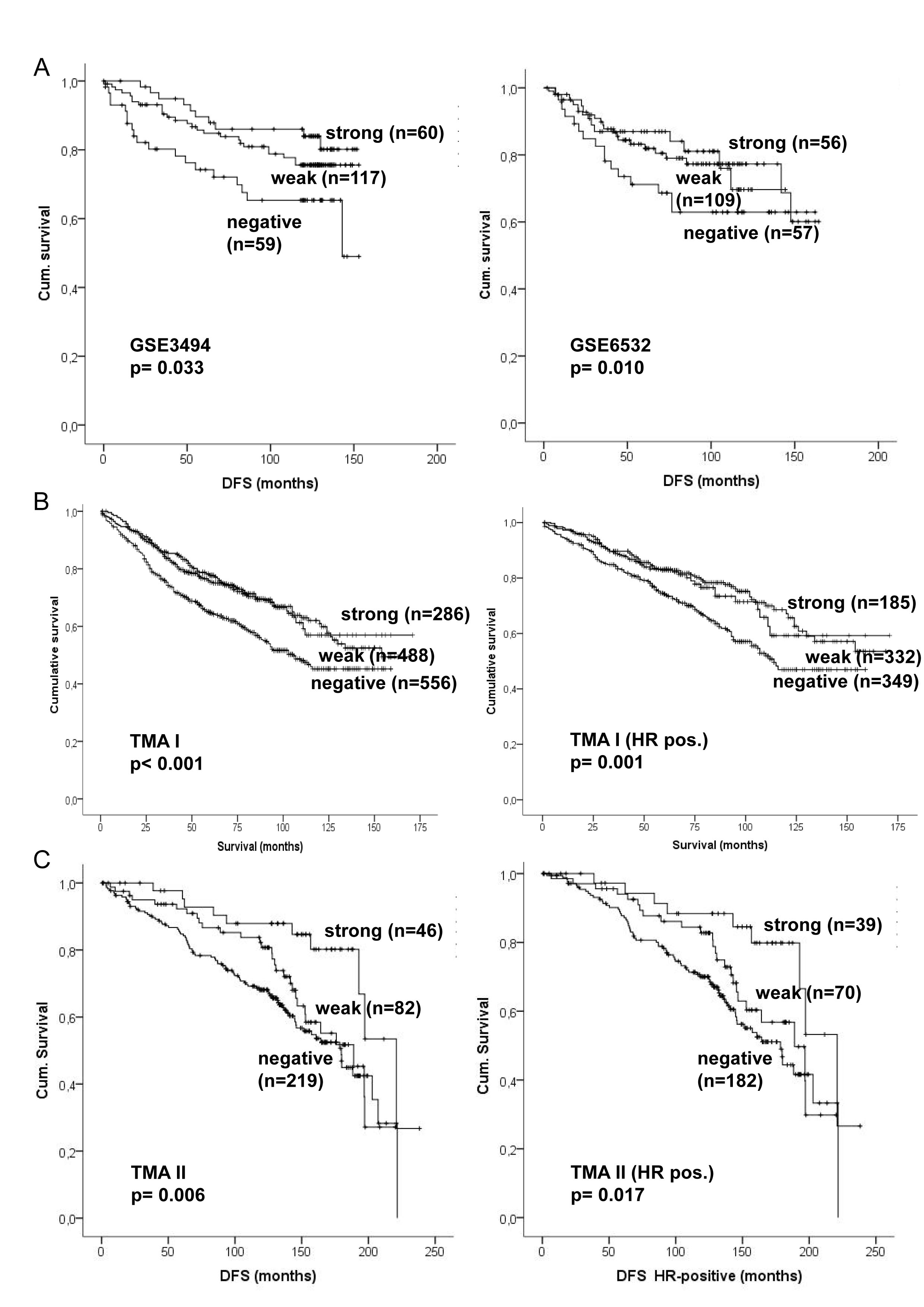 Kaplan–Meier analysis of CADM1 mRNA and protein expression in primary breast cancer.