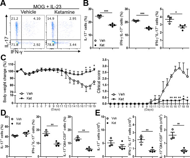 Ketamine inhibits the reactivation of MOG-reactive Th17 cells.