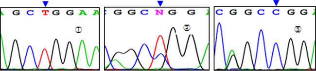 Sequencing diagram of miR-149T>C (rs2292832).