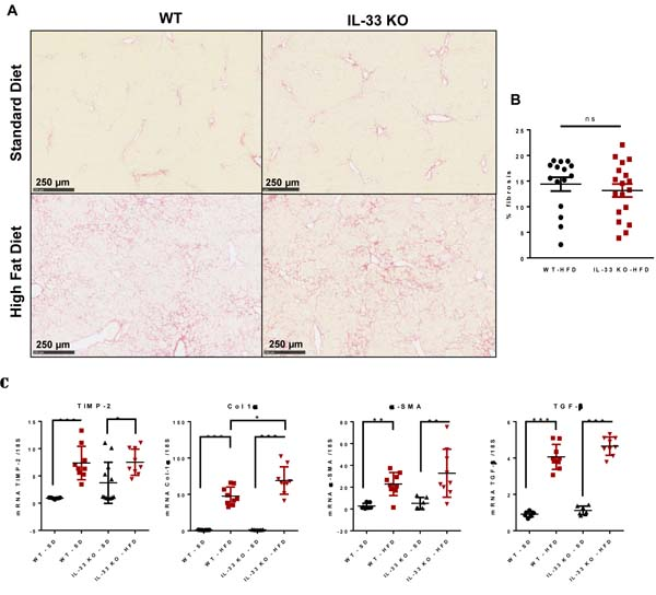 Evolution of diet-induced steatohepatitis towards fibrosis is not affected by IL-33 deficiency.