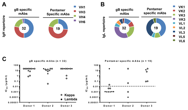 Heavy- and light-chain immunoglobulin gene usage.