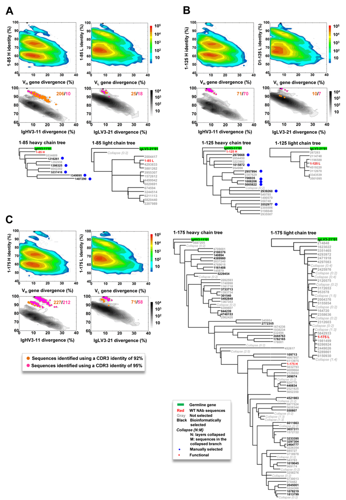 Lineage and correlation analysis of three pentamer-specific antibodies from donor 1.