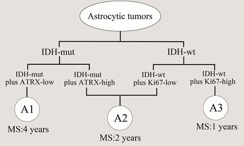 Model for classification of astrocytic tumors based on molecular markers.